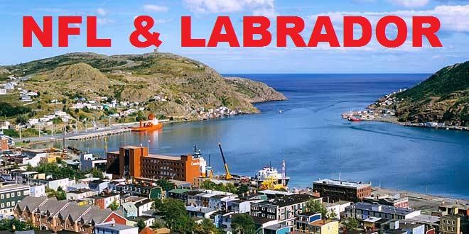 NFL & Labrador